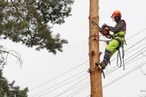 Professionnel élaguant un arbre avec une tronçonneuse