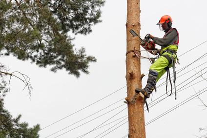 Professionnel élaguant un arbre avec une tronçonneuse élagueuse