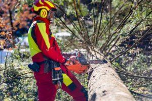 Professionnel ébranchant un arbre tombé avec une tronçonneuse