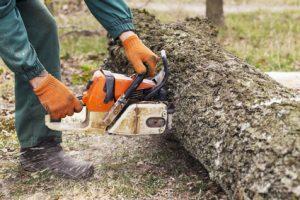 Tronçonneuse coupant un arbre tombé