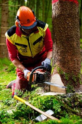 Bûcheron abattant un arbre avec une tronçonneuse