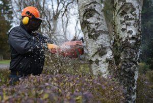 Professionnel coupant un arbre de moyenne section