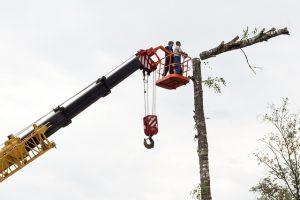 Élagueur professionnel ététant un arbre