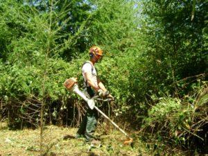 Entretien d'une forêt avec une débroussailleuse professionnelle