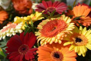 Massifs fleuris