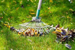 Ramassage des feuilles mortes