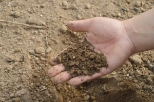 engrais herbe de tonte