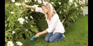 Taille-herbes Bosch